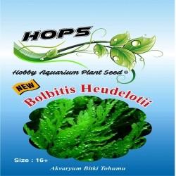 Fatih-Pet - Akvaryum Bitki Tohumu Bolbitis Heudelotii 12 li