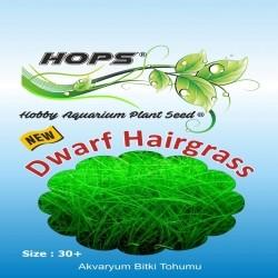 Fatih-Pet - Akvaryum Bitki Tohumu Dwarf Hairgrass 12 li